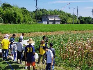 20160807 スイートコーン収穫祭_6699.jpg